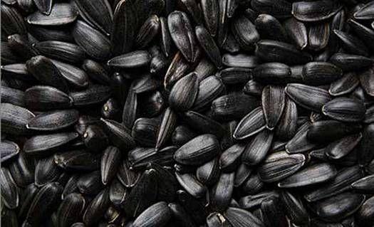 купить семечки подсолнуха отборные калиброванные кондитерские оптом сорта СПК,лакомка,посейдон,добриня,орешек,фракции 32+, 34+, 36+, 38+, 40+, 42+,45+