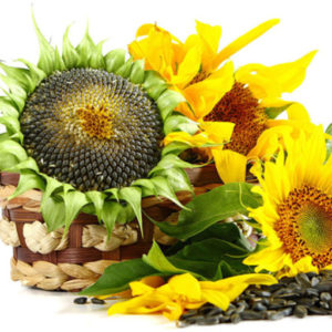 купить семечки оптом купить семечки подсолнечника отборные,калиброванная подсолнуха